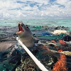 How Plastic Destroys Our Seas