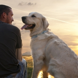 Why Losing a Dog Can Be Harder than Losing a Relative or Friend