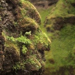 The Hidden Nature of Trolls