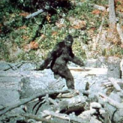 Bigfoot Proven?? Must Watch!!!