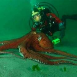 Octopus Eats A Shark