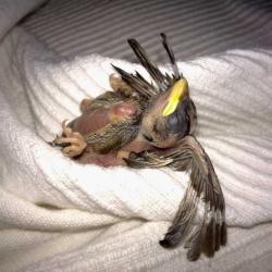 A Tale of a Bird