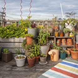 Container Gardening: How To Grow Vegetables Without A Backyard
