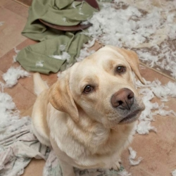 Ten Reasons Your Dog May Develop Behaviour Problems