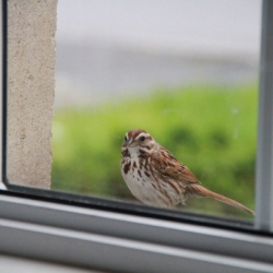 The Reasons Birds Hit Windows and How to Prevent It