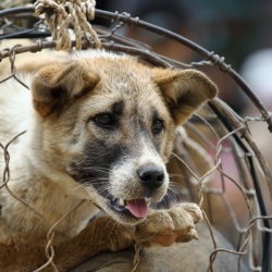 Good News! Large Dog Meat Market in Busan, South Korea to Close!
