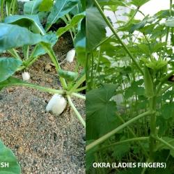 Haven's Mini Organic Vege Garden