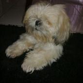 Martin's dog