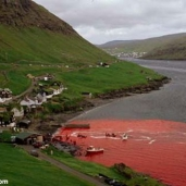 Dolphin Killing in Denmark!!