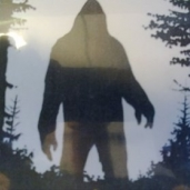 Sasquatch (Bigfoot)!!!