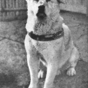 Hachiko   ~A Lesson in Eternal Friendship & Loyalty