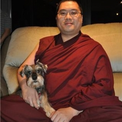 Dogs in Tibetan Monasteries