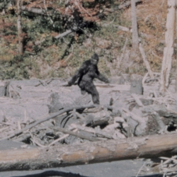 10 Weird Facts About Bigfoot