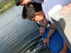 Last of the fishes being released.