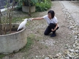 Visit our aviary and make friends with our cockatoos! Here is Yenpin jie-jie visiting the Aviary ❤ retreat.kechara.com/aviary