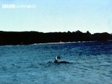 Taken in Lake Champlain in Canada. A huge water monster...neat...
