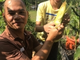 Great father and son team at Kechara Forest Retreat harvesting vegetables.