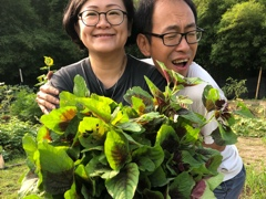 At Kechara Forest Retreat land we have nice fresh spinach growing free of chemicals and pesticides. Yes!