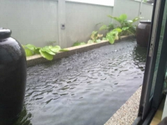 Next to my bed is a sliding door that looks onto a fish pool....and when it rains, the sound is so soothing. Rain falling onto still water is so beautiful like dharma teachings cascading onto a karmically ripe mindstream....I love this. I always liked water.