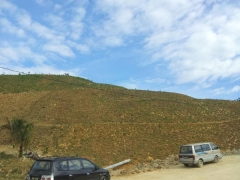 So happy to see the entire slopes of the Ladrang hill is covered with cow grass!! ~ Lew