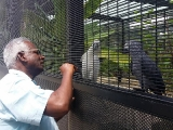 Dato' Dr. Vellayan Subramaniam is our vet of The Aviary at Kechara Forest Retreat. He pays visits to see our birds to make sure they are in good shape. The powdered multivitamins & mineral supplement we are using for our birds are a special concoction from Dr. Vellayan. Yearly we spent about RM40k on the birds' health and well being. by Jace Chong, shared by Pastor Antoinette