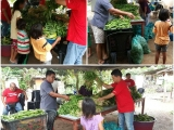 133kg of vegetables were redistributed to 41 families in Orang Asli village here in Bentong yesterday. Vivian @ Kechara Soup Kitchen