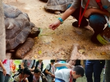 A lot of Giant turtle can find here they can live up to 150 years old. The children can feed the giant turtle but watch it finger when u feeding. by Asyley Chia KSDS