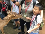 Royden feeding a deer during the Farm in The City outing. Lin Mun KSDS