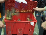The birds would be released after the prayers and mantra recitation. Alice Tay, KSDS