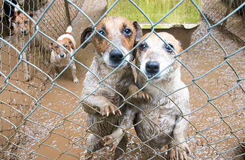 Puppy mills keep breeding dogs in deplorable conditions, using them to produce cute pets to stock shops.