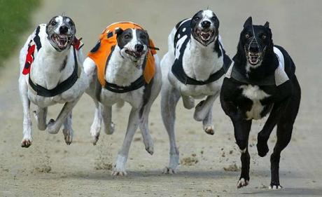 Greyhound racing looks like harmless fun but has anyone ever thought what happens to the dog when they have outlived their competitive racing days?