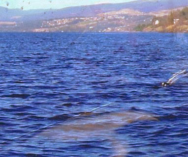 Photo of a mysterious form just below the surface on the east side of Okanagan Lake.  Michelle and Gilles Beliveau took this photo from their boat on 7th Sept 2006