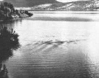 Photo of Ogopogo by Eric Parameter in 1964
