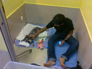 When Mumu was seriously ill with pancreatitis many years ago, my friend and Mumu's caretaker KB told me he wanted to stay in the clinic with Mumu and keep him company. KB slept there and watched Mumu 24 hours a day until he became better. I will always be grateful.