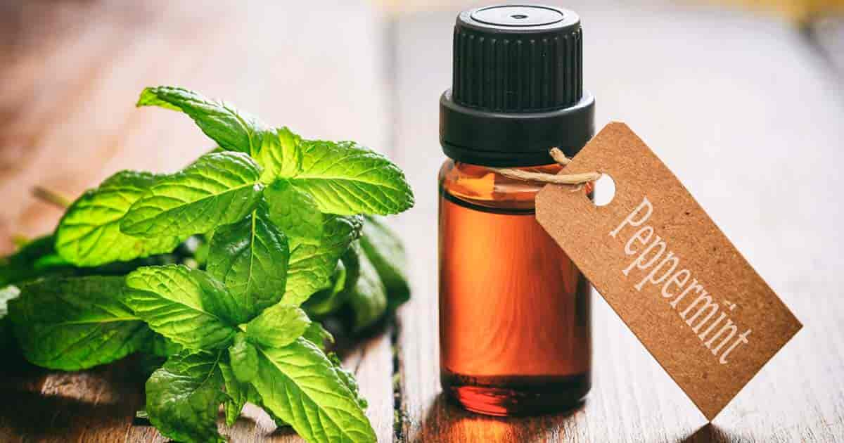Peppermint can help in cases of migraines