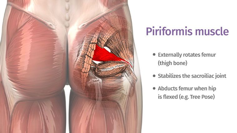 The piriformis muscle is a small muscle located deep in the buttock