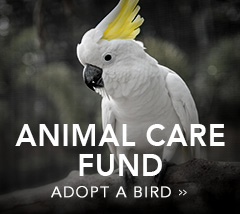 Animal Care Fund